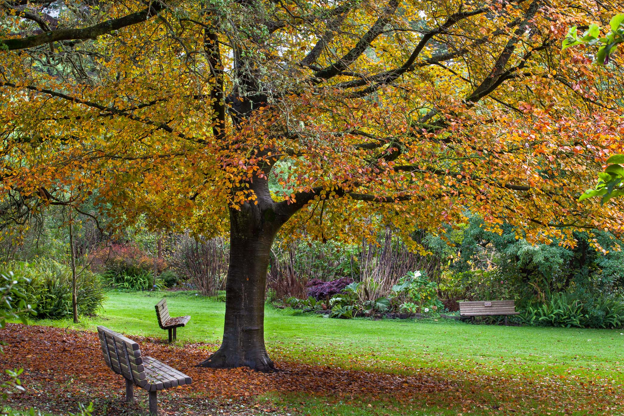 Free Cheap Sf >> Last Chance: Peak of Fall Colors at SF Botanical Garden | Golden Gate Park