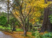 Fall Colors of the Bay: Where to See the Leaves Change | 2021