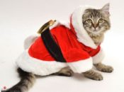 12 Days of Kittens: Adopt & Snuggle a Warm Kitten | SF