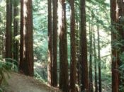 5-Mile Hike Through the Redwoods | Oakland