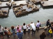 Sea Lions' 29th Anniversary at Pier 39: Guided Tours | Jan. 19-20