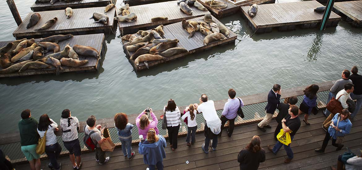 Sea Lions 29th Anniversary Weekend Guided Tours Pier 39