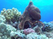 International Ocean Film Festival Preview | The Presidio