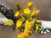 Lichen BioBlitz Workshop and Treasure Hunt | Berkeley