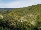 """Escape the Holiday Madness"" Scenic Aerobic Hike   Los Altos"