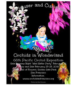 Orchid san francisco cryptocurrency