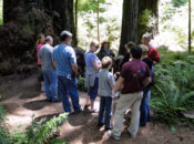 Free Second Saturdays Admission: A Day with Nature | Redwood State Parks