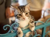 Final Day: SPCA's Cat Cafe Pop-Up & Puppy Cuddle Experience | SF
