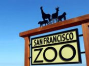 "Free Admission for ""Pigs"": Chinese New Year Celebration & Lion Dancing 