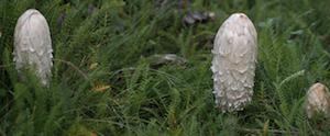 Mushroom Walk in McLaren Park | SF