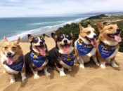 2018 Corgi Con Beach Party