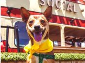 Beer Week Pints For Paws: Benefitting Muttville Senior Dog Rescue | SF