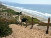 Hike It Up: Fort Funston, Stern Grove & Brewery Hike | SF