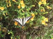 """Black Diamond in Bloom"" Hiking Tour | Antioch"