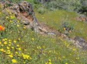 Easter Morning Wildflower Walk   Mt. Diablo
