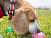 10th Annual Doggie Easter Egg Hunt w/ 1,000 Eggs | Mission District