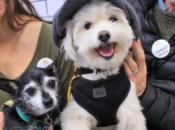 Muttville Senior Dog Rescue's Valentine's Weekend Adopt-a-thon   SF