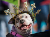 """EmBARKadero"" St. Patrick's Day Dog Parade & Costume Contest 
