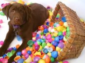 2019 Doggy Easter Egg Hunt | SoMa
