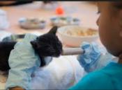 Kitten Nursery Shower: Feeding Program & Workshop | Peninsula