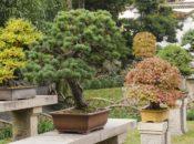 Hands-on Bonsai Workshop | Macy's Flower Show