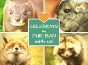 SF's Fur Ban Celebration: Free Vegan Food & Live Music   Berkeley
