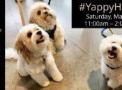 """Puppy Mama"" Meetup & Dog-Friendly Yappy Hour 