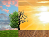 How to Reverse Climate Change: Presentation & Performance | SF
