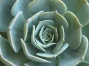 Spring It On: Succulent & Cacti Plant Sale | Walnut Creek