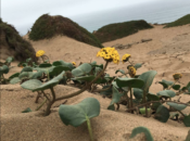 Field Trip at Daly City Dunes | Daly City