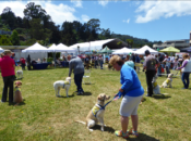2nd WAG Dog Festival | Sausalito