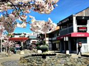 Japantown Buchanan Street Mall Celebration | SF
