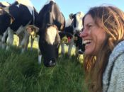 Straus Farms Tours with Cows & Cheese | Marin