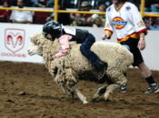 "2018 Jr. Rodeo & ""Mutton Busting"" Lil' Kid Sheep Riding 