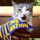 First Caturday at Lake Merritt: Unofficial Social Gathering for Cats   Oakland