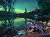 NightLife's 5th Annual BigPicture Natural World Photography Competition | California Academy of Sciences