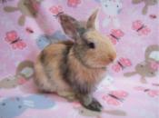 Special Bunny Adoption Show | Sunnyvale