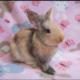 Special Bunny Adoption Show   Sunnyvale