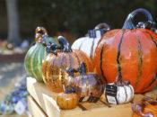23rd Annual Great Glass Pumpkin Patch: 10,000+ Pumpkins | Palo Alto