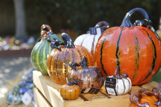 East Palo Alto Ca >> 23rd Annual Great Glass Pumpkin Patch: 10,000+ Pumpkins | Palo Alto