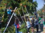 Walnut Creek Area Community Harvest | Pleasant Hill