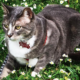 First Caturday at Lake Merritt: Outdoor Cat-napping & Socializing | Oakland
