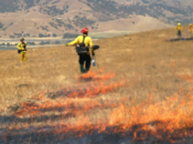 The Benefits & Dangers of Fire | Morgan Hill