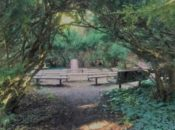 """Litquake in the Gardens: """"War in the Woods"""" with David Harris 