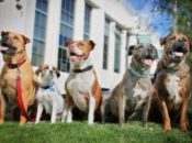 2018 Bay Area Pet Con: Adoptable Pets, Costume Contest & Demos | San Jose