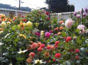 Portola Garden Tour | SF's Garden District