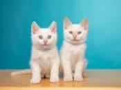 "SPCA ""Cuddle Me"" Festival: Free Doggie & Cat Adoptions | SF"