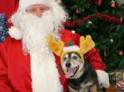 Christmas in the Park: Dog Day & Toy Drive at the Park | San Jose