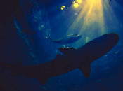 Sharktoberfest NightLife | California Academy of Sciences