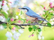 2018 Wildlife Festival: Birdfeeder Building & Live Animal Demos | Cupertino
